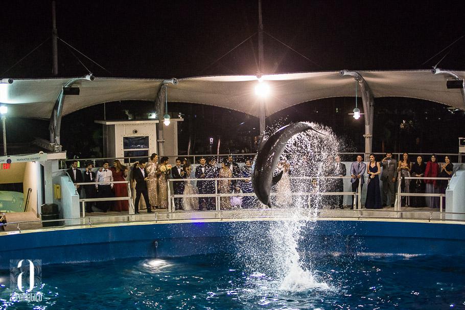 Miami Seaquarium Wedding-043