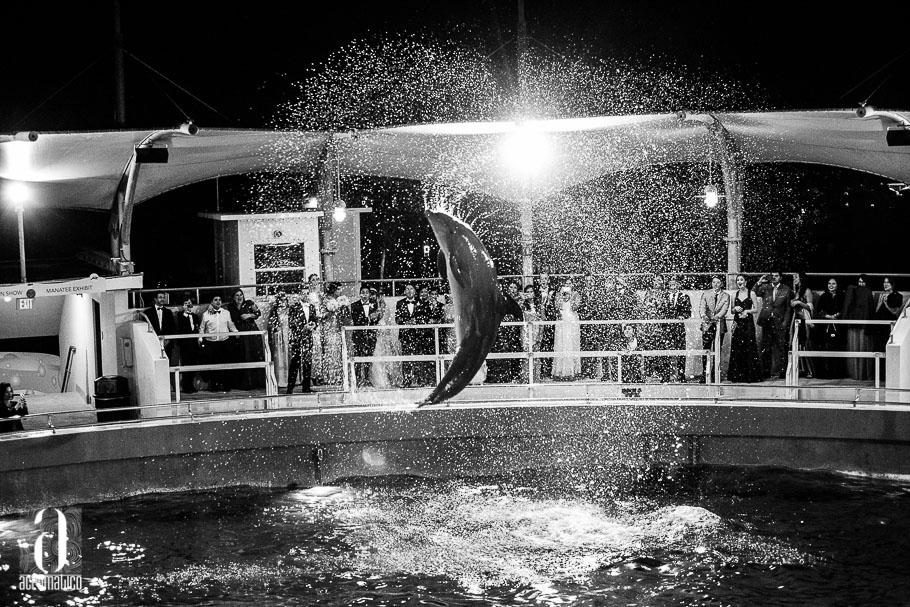 Miami Seaquarium Wedding-045